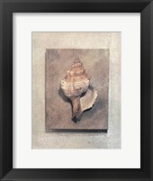 Framed Seashell Study III