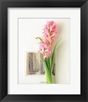 Framed Hyacinth, Euro-Floral