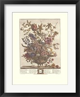 February/Twelve Months of Flowers, 1730 Framed Print