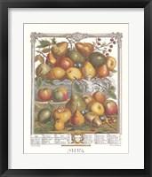 Framed January/Twelve Months of Fruits, 1732