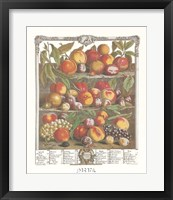 August/Twelve Months of Fruits, 1732 Framed Print