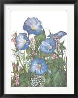 Morning Glories Framed Print