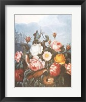 A Group of Roses Framed Print