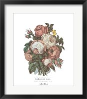 Framed Roses of May