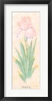 Framed Iris Soliloquy I