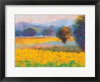 Sunflowers in Provence Framed Print