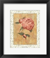 Framed Antique Peony II
