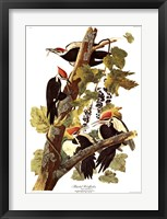 Framed Pileated Woodpecker