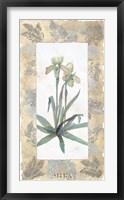 Framed Elegant Orchid