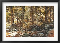 Framed Sunlit Forest (Yosemite)