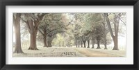 Framed Avenue of Trees