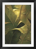 Amazon Canopy Framed Print