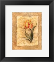 Cottage Tulip Framed Print