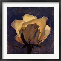 Glowing White Rose Framed Print
