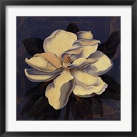 Glowing Magnolia Framed Print