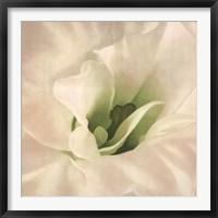 Framed White Azalea