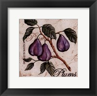 Fruit from the Branch III Framed Print