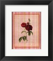 Botanical Rose III Framed Print