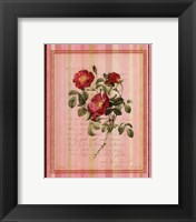 Botanical Rose IV Framed Print