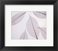 Sheer Leaves I Framed Print