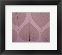 Sheer Leaves II Framed Print