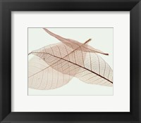 Sheer Leaves IV Framed Print