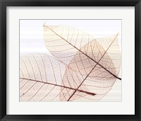Sheer Leaves III Framed Print