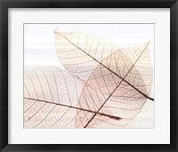 Framed Sheer Leaves III
