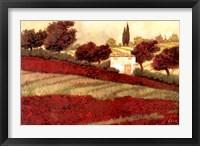 Apapaveri Toscana I Framed Print
