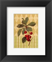 Botanical Cherries Framed Print