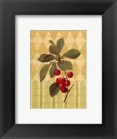 Framed Botanical Cherries