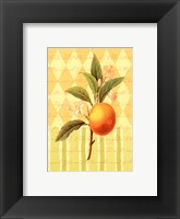 Framed Botanical Orange