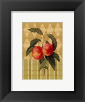 Botanical Peaches Framed Print