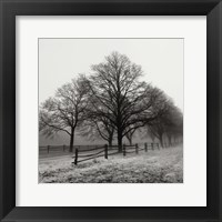 Framed Row of Trees