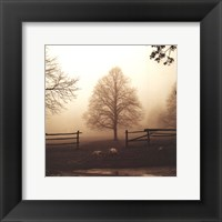 Morning Texture Framed Print