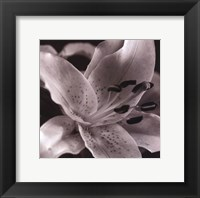 Framed Speckled Lily