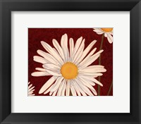 Framed White Daisy On Red