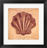 Scallop Framed Print