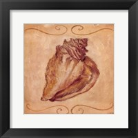 Conch Framed Print
