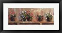 Framed Petunias in Pots