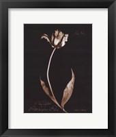 Framed Tulip Sylvestrie No. 44