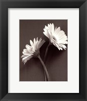 Framed Fresh Cut Gerbera Daisy IV