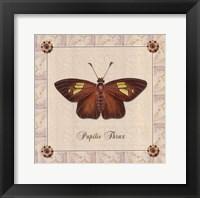 Framed Papilio Thrax