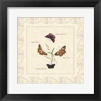 Framed Papilio II