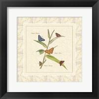 Framed Papilio III