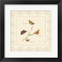 Papilio IV Framed Print