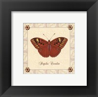 Framed Papilio Cocalia