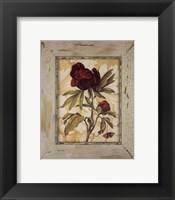 Framed Antique Botanicals V