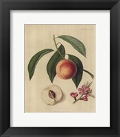 Framed Acton Scott Peach