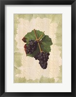 Framed Antique Grapes - Gougenot